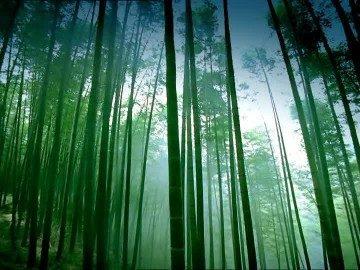 Mi querido Bambú